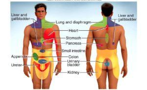 referred pain, afgeleide pijn, lage rugpijn, nieren, gezondheid