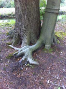 Knuffelende bomen. gezondheid.JeanineTheunissen.weerstand, geluk, anti-stress,workshop