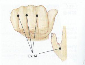 acupressuur EX14 - zwemvliesjes.hoofdpijn-nekpijn, gezondheid-workshops